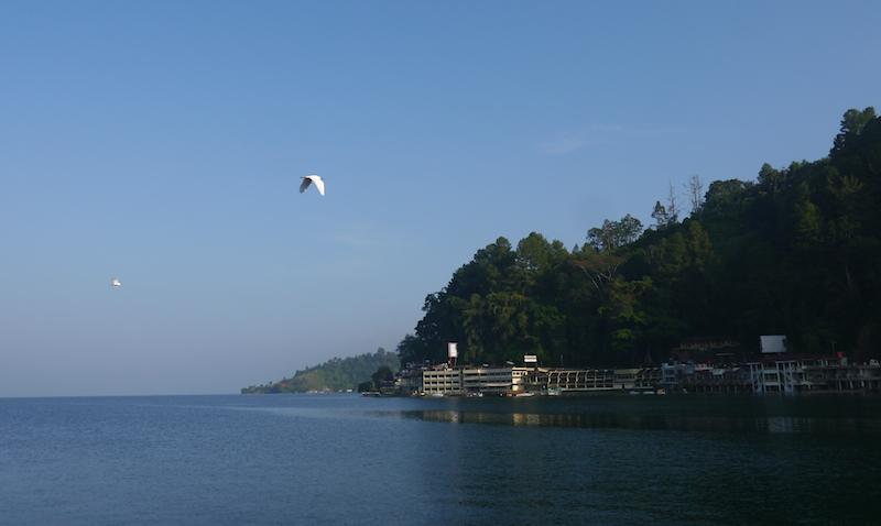 Burung-burung air yang melintas di atas Danau Toba