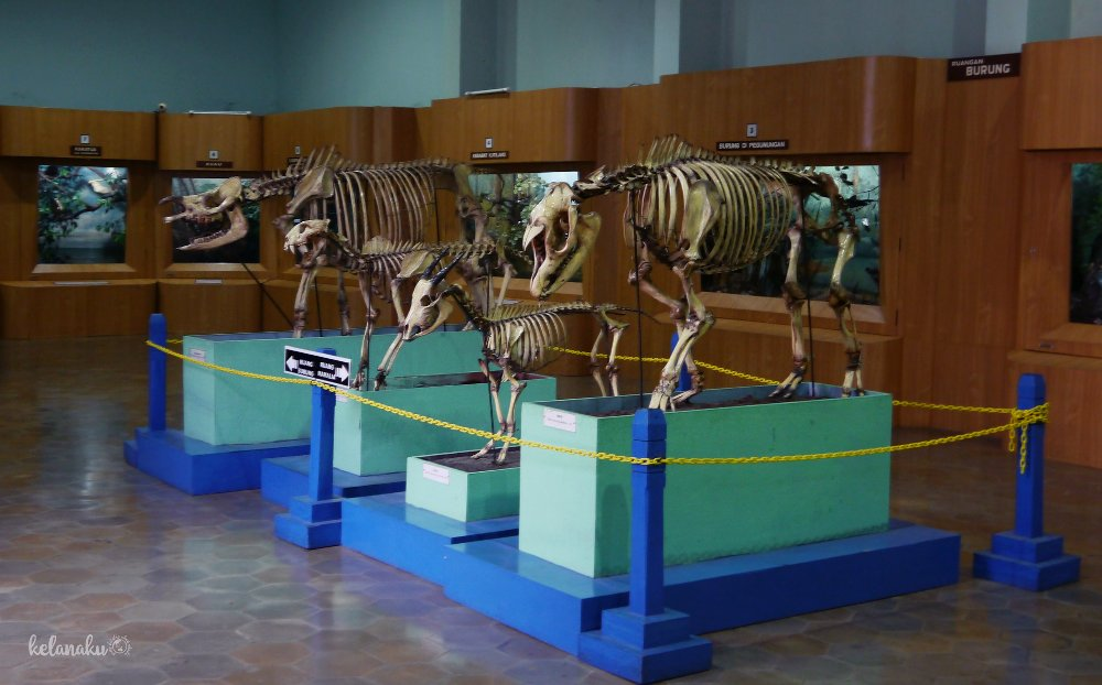 Koleksi spesimen-spesimen di Museum Zoologi