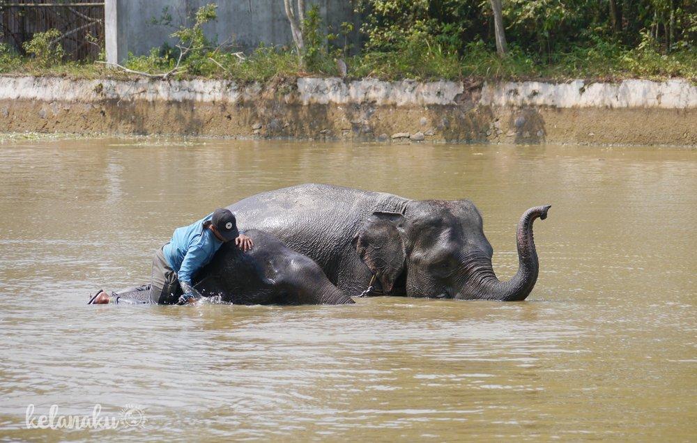 Memandikan gajah di way kambas