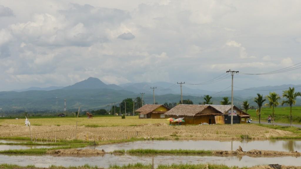 Pematang Sawah di Padang