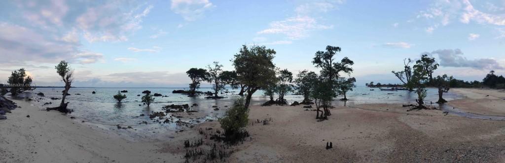 Panorama Mangrove di Pantai Legon Guru