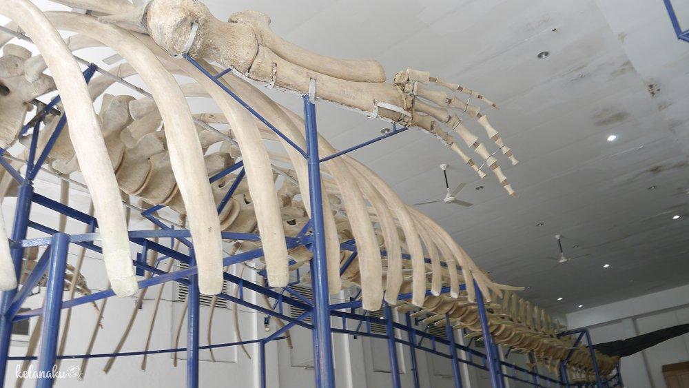 Mengintip Koleksi Museum Zoologi Bogor Atau Museum