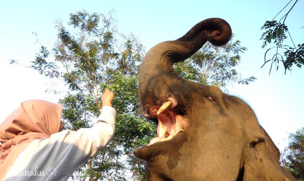 Gajah di Way Kambas