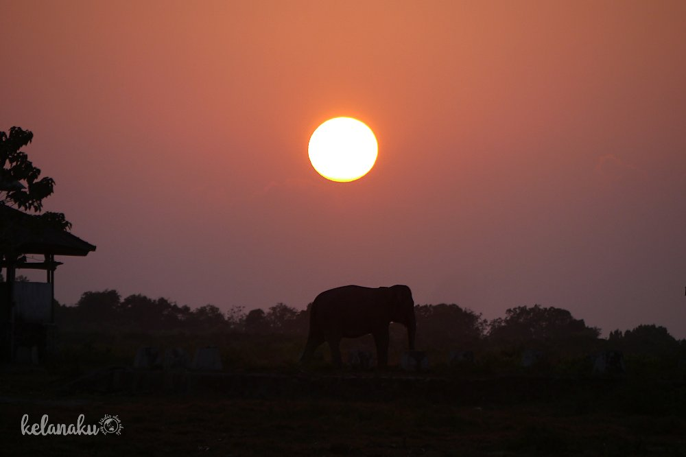 Sunrise at Way kambas National Park