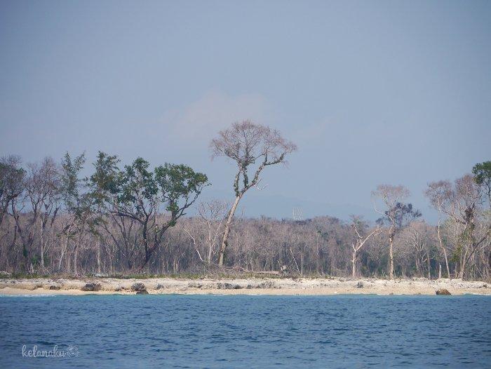 Hutan pasca tsunami selat sunda